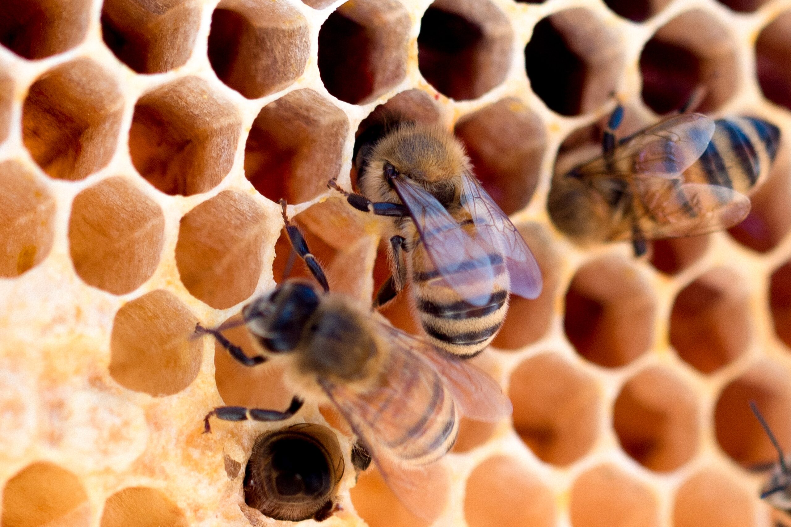APIVAL – Tutela e miglioramento dell'apiario e della qualità dei suoi prodotti